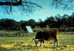 Pasture Power System
